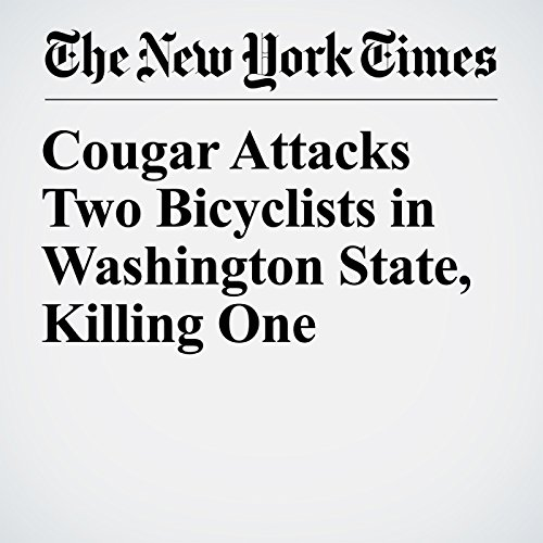 Cougar Attacks Two Bicyclists in Washington State, Killing One copertina