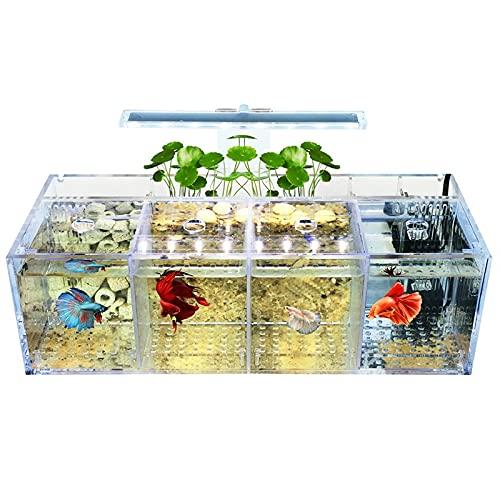 XXJIC Sucastle Mini Tanque de Peces con LED Multicolor, jardín de Agua, Tanque de Peces autolimpiables Que Crece Alimentos, Mini ecosistema de Escritorio, decoración de Escritorio Que Crece Plantas
