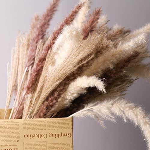 Mudysson 16.92' Dried White Pampas Grass 15 Pcs|Brown Dried Flower 15 Pcs|30 Pcs Natural Dried Reed, Dried Flower for for Wedding Decoration & Home Arrangement (60 Pcs)