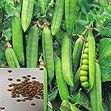 AchidistviQ 400 Piezas De Semillas De Guisantes, Plantas Trepadoras De Rápido Crecimiento, Plantas De Guisantes De Jardín Fáciles De Cultivar, Semillas De Hortalizas Semillas de guisantes