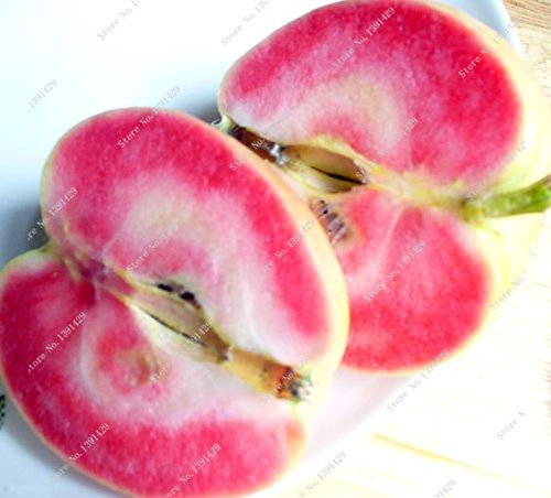 200 SEEDS - Mélange de graines (9Kinds) Ficus Carica Fig Fruit Arbre *