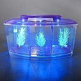 Alfie Pet - Baird Betta Aquarium Kit with 2 Dividers - Color: Purple