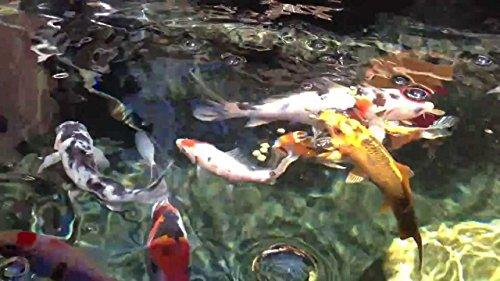 Clearwater Médium de filtration pour bassin Koï et aquarium en zéolite 9–16 mm Clinoptilolite (25 kg)