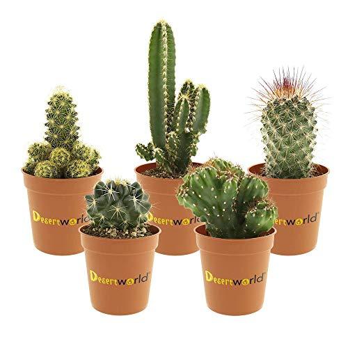 Desertworld Mini Kakteen Set - 5 Stück - Inklusive Terrakotta Töpfe Topfgröße Ø 6 cm - Pflanzenhöhe 8-15 cm