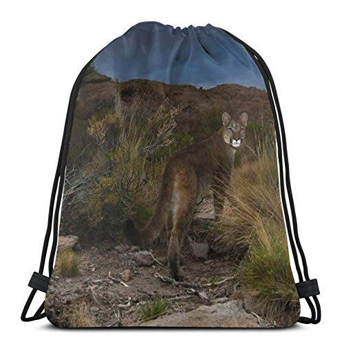 Perfect household goods Puma Cat Andes Argentina Drawstring Backpack Bag Lightweight Gym Travel Yoga Casual Snackpack Shoulder bag for Hiking Swimming beach