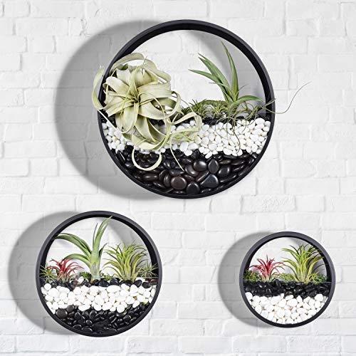 3 X Metall Wandbehang Blumentöpfe,2-in-1 Tragbare Kreative Pflanzer+ Transparent Terrarium Balkon Treppe Pflanzen Halter Eisen Eimer Blumen Aufhänger Glas Vertikal Container mit Abnehmbarer Schraube