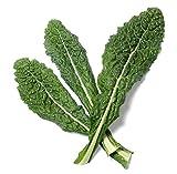 700 Lacinato Kale...image