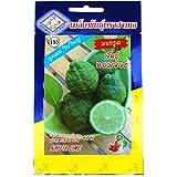 コブミカン Kaffir Lime タネ 種子 タイの野菜 5粒 CHUA YONG SENG