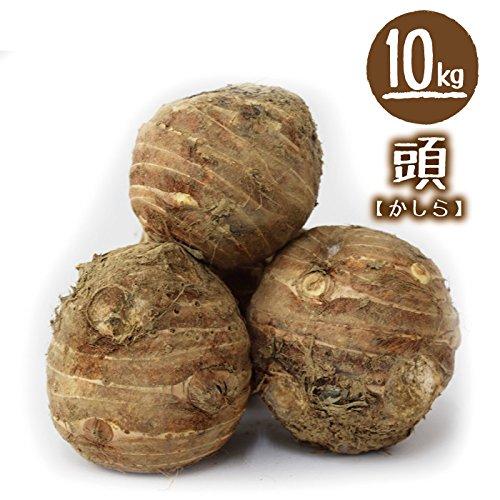 福井県産 中村農園 上庄里芋 訳有り(形がいびつ・外皮に傷・サイズが小さい等) 5kg 土付き