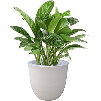 YUCCABE ITALIA FOXB P Cup White 15 Inches Planter