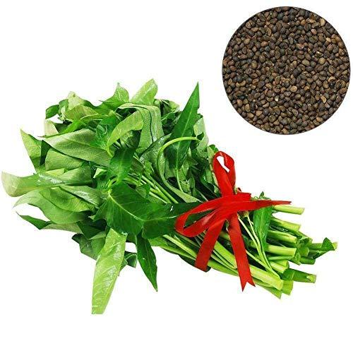 LIANA IRWIN 400 Gemüsesamen Wasserspinat Samen,Gartengemüse Grüne Organische Chinesische Samen, zum Kochen