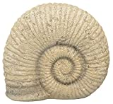 matches21 Fossil Ammonit Versteinert Schnecke Schneckenhaus Gartendeko Polyresin Vintage Deko 1 STK - 20,8x10,8 cm