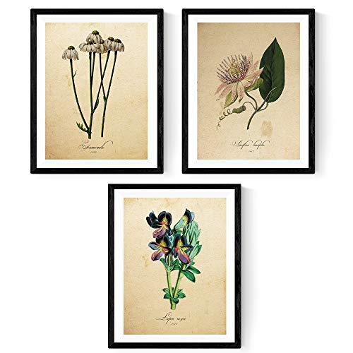Pack de láminas INFUSIÓN. Posters con imágenes de botánica. Decoración de hogar. Láminas para enmarcar. Papel 250 Gramos