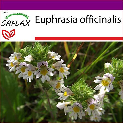 SAFLAX - Big Garden - Heilpflanzen - Augentrost - 200 Samen - Mit Gewächshaus, Töpfen, Anzuchtsubstrat und Dünger - Euphrasia officinalis