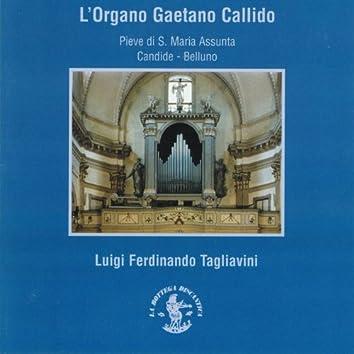 L'organo Gaetano Callido (1797 - 1799) (Pieve S. Maria Assunta, Candide, Belluno, Italy)