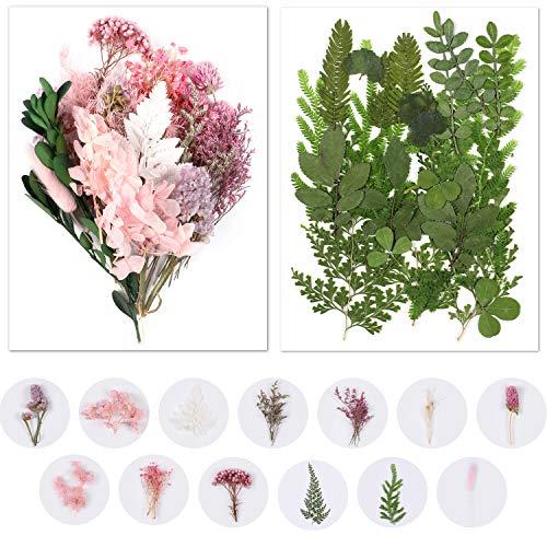Flores Secas Manualidades Pequeñas flores secas  Marca vamei