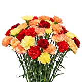 FlowerPrime 100 Fall or Autumn Carnations - Special Holiday Variety Fresh Natural Cut Flowers