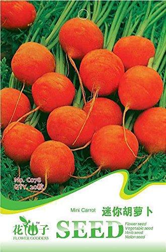 Livraison gratuite 3 Packs 60 Of Mini Carrot Seeds, Daucus Carota Seed C078