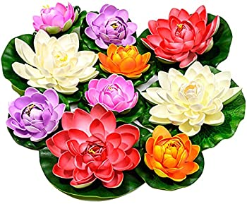 Best water lily flowers Reviews