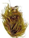 Black Cat Weedy Clonk - Plomo para pesca de siluro, con revestimiento de hierba, peso: 60 g