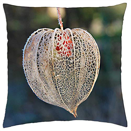 LESGAULEST Throw Pillow Cover (24x24 inch) - Nature Frost Tomatillo Frosty
