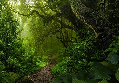 wandmotiv24 Fototapete Waldweg Dschungel, XL 350 x 245 cm - 7 Teile, Fototapeten, Wandbild, Motivtapeten, Vlies-Tapeten, Bäume Weg Pfad M6480
