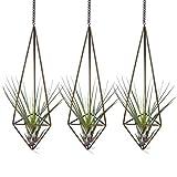 Knik - Soporte para plantas de aire para colgar en vidrio, contenedor de cactus suculentos, soporte geométrico para plantas de aire Himmeli, soporte para Tillandsia con cadena, bronce (3 pequeños)
