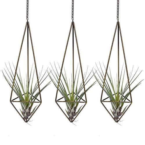 Knik Glass Himmeli Geometrischer Pflanzen-Halter für Luftpflanzen, für Sukkulenten, Kaktus, Blumentopf,Tillandsien, Aufhänger mit Kette, im modernen rustikalen Stil, für Heimdekoration (3 klein)