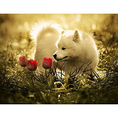 SINACO DIY 5D Diamant Malerei Voll Runde Drill Stickerei-Kreuz-Stich Kunsthandwerk Leinwand-Wand-Dekor Cute Baby White Wolf 15.7x11.8in 1 Pack by
