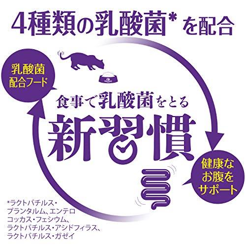 ウェルネスコア(穀物不使用・高たんぱく質)子猫用(離乳期-1歳)骨抜き七面鳥400g