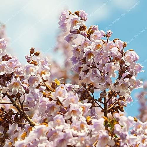 SANHOC 200pcs 100% Qualität Paulownia elongata Baum Bonsais schnell wachsenden Baum Bonsai Ourdoor Pflanzen blühen Haus Garten