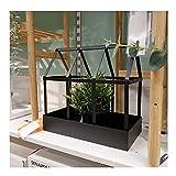 WXJ Mini Invernadero de Acero 30x18x29cm Plantas suculentas Kit de casa Verde Invernadero Interior para Plantas de Aire de Musgo de Helecho Regalo de inauguración de una casa en Miniatura