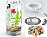NoClean Aquariums GravityFlow Self-Cleaning Glass Betta Tank Starter Kit with Polished Stones and...