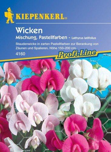 Wicken 'Staudenwicken'