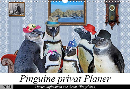 Pinguine privat Planer (Wandkalender 2021 DIN A3 quer)