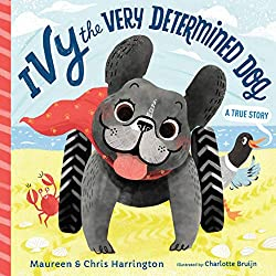 ivy the very determined dog - amazon affiliate - best books - building phrases