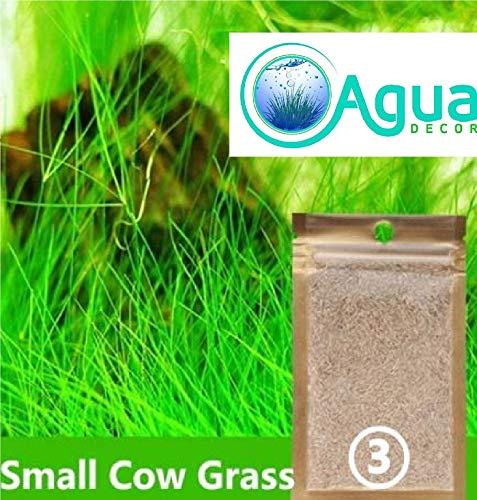 Agua decor Aquarium Grass Seed Small Cow Grass 2 Pack Most Beautiful Grass