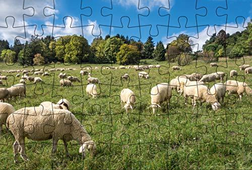 Puzzle-Postkarte Schwäbische Alb (Kultur erleben im GMEINER-Verlag): Motiv: Schafherde auf Wiese