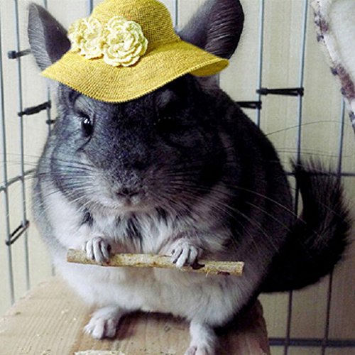Hearsbeauty natur Holz Kauen Sticks Zweige für kleine Haustiere Kaninchen Hamster Meerschweinchen Spielzeug - 3