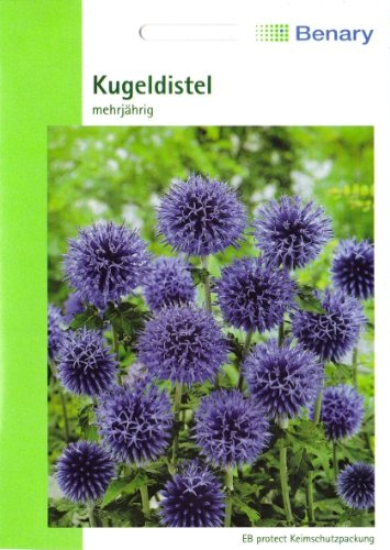 Kugeldistel, Echinops ritroca., 30 Samen