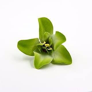FLOWER 30pcs/lot Artificial Silk Orchid Heads for Wedding Decoration DIY Wreath Gift Scrapbooking Craft Supplies Fake (Green)