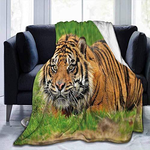 Flanelldecken Home Netter weicher Tiger, Sumatra Katzen Hinterhalt, für Bett Couch Sofa Leichte Reisende Camping Throw für Kinder Erwachsene