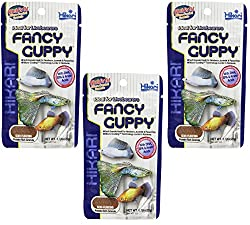 What do guppies eat? Guppy food reviewed 6