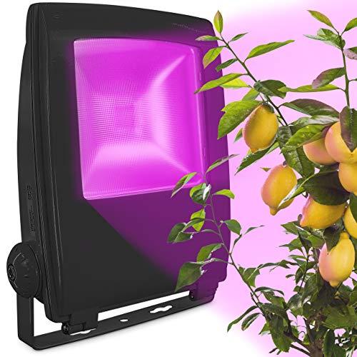 LED Pflanzenlampe zur Überwinterung von mediterranen Pflanzen [12W] - Entwickelt mit den Zitruspflanzen-Profis von Meine Orangerie - Vollspektrum Pflanzenlicht - Wachstumslampe