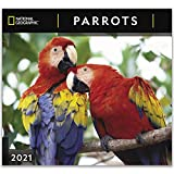 National Geographic Parrots 2021 Wall Calendar