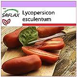 SAFLAX - Tomate -San Marzano - 10 semillas - Lycopersicon esculentum