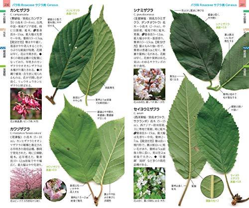 山溪ハンディ図鑑14増補改訂樹木の葉実物スキャンで見分ける1300種類