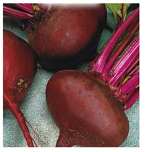 350 Aprox. - Betterave à graines du jardin égyptien Paonazza - Beta Vulgaris en emballage d'origine fabriqué en Italie - Betterave