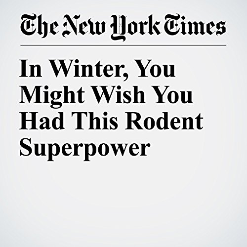 In Winter, You Might Wish You Had This Rodent Superpower copertina