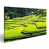 Bild Bilder auf Leinwand Reisterrassen von Bali Island,